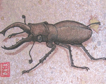 ACEO Stag Beetle - Archival Print - Insect Art