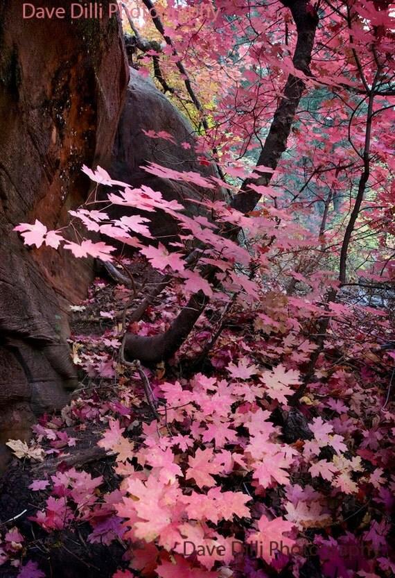 Photograph Sedona Fall Pink Southwest Arizona Flagstaff Colors Oak Creek Canyon 13 x19 Matted Fine Art
