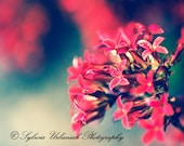 Macro Photography nature photography flower photography spring decor red green emerald wall art  Fine Art Photography Print