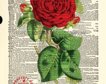"""Red Rose, dictionary print, vintage botanical illustration, printed on an 8.5""""x11.5"""" antique dictionary page."""