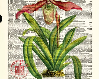 """Flower dictionary print, Orchid vintage botanical illustration, printed on an 8.5""""x11.5"""" antique dictionary page."""