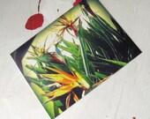 "POSTCARD WRITING SET of 6 Tropical Flowers ""Birds of Paradise"""