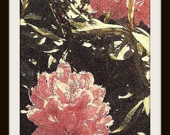 "PHOTOGRAPHIC PRINT FLORAL Pink ""Hydrangeas"""