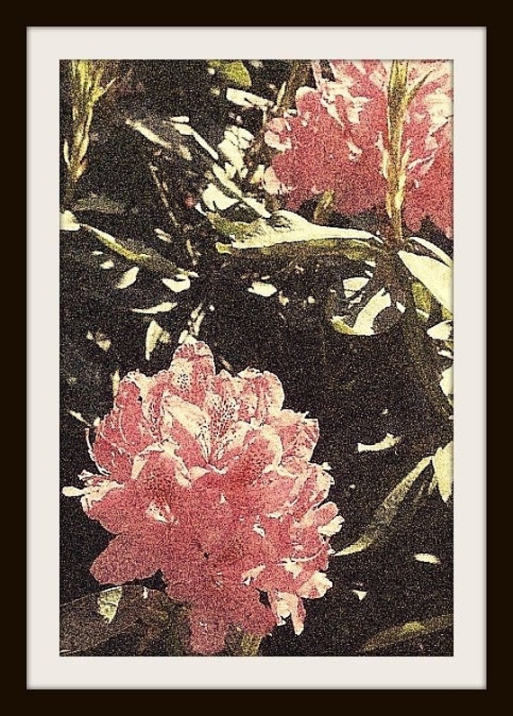 "PHOTOGRAPHIC PRINT FLORAL Pink ""Hydrangeas"""