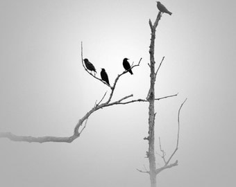 Black and White photography, minimalist photography, minimalist art, bird photography, fog photography, minimalism, grey