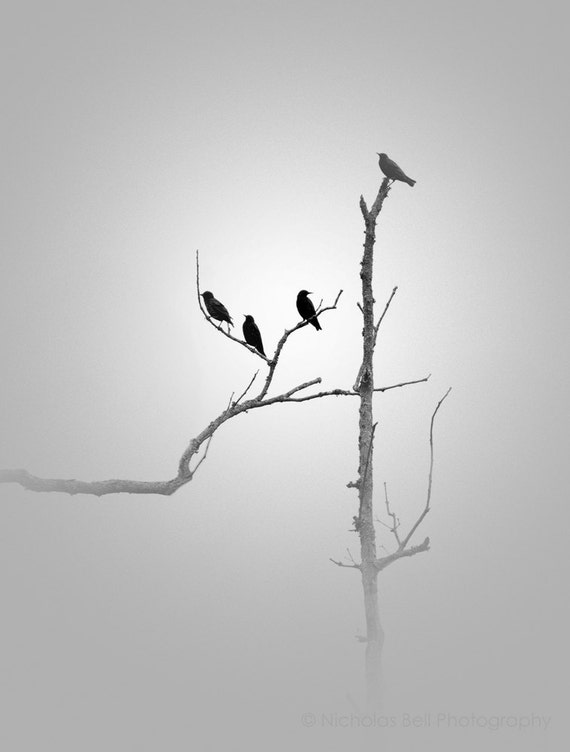 Black and White photography, minimalist photography, minimalist art, bird photography, fog photography, minimalism, grey
