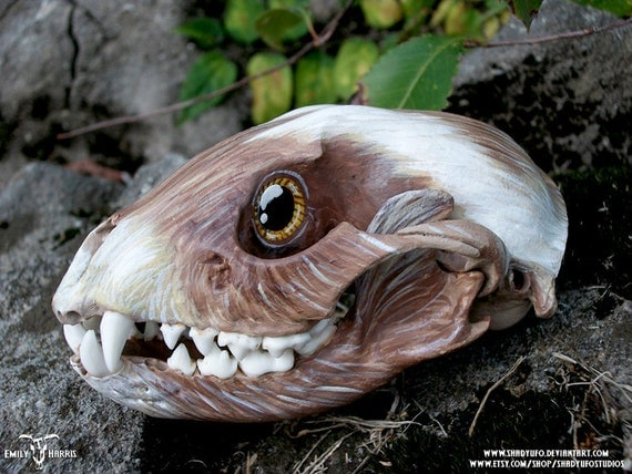 Living Heads Painted Raccoon Skull