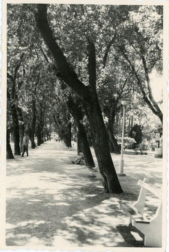 "Vintage Photo ""Shaded Park"", Photography, Paper Ephemera, Snapshot, Old Photo, Collectibles - 0039"