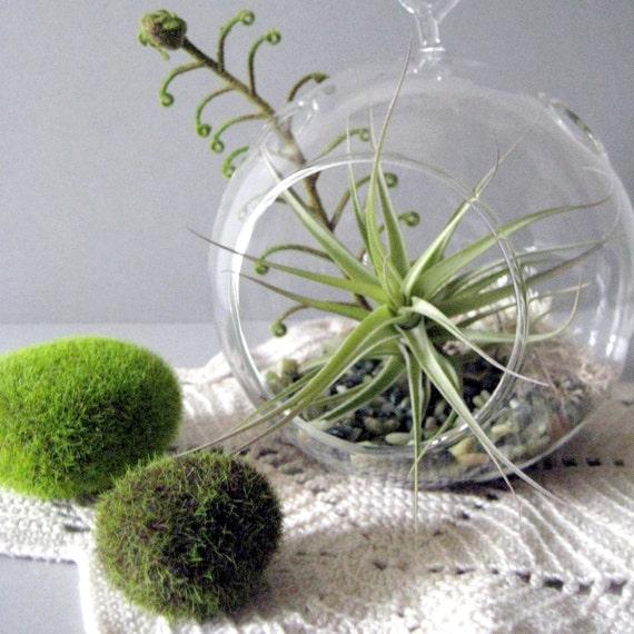 Green Layers Tillandsia Terrarium