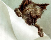 Cairn Terrier Card - Toto Dog Greeting Card - Repro Vtg Image - KatyDidsCards