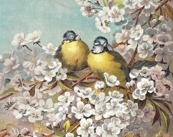 Birds Greeting Card   Blue Tit Birds in Cherry Tree   Giacomelli Repro