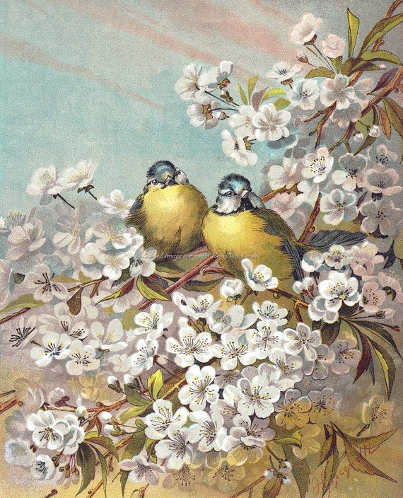 Birds Greeting Card | Blue Tit Birds in Cherry Tree | Giacomelli Repro