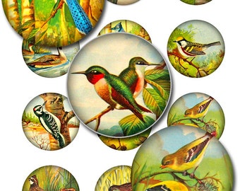 Vintage Birds Round Circles Instant Download 1 and 2 Inch JPEG (12-23)