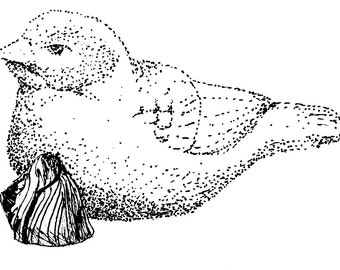 8x10 print of stippled bird with rock ink drawing