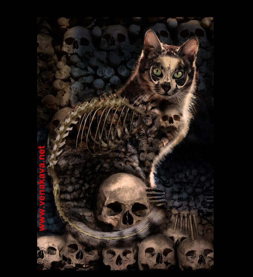 Skull Cat Gothic Print Steampunk 13x19 Kitten By