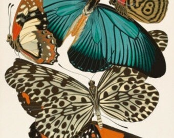 Butterfly Collection II - Cross stitch pattern pdf format