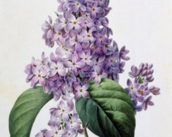 Lilacs - Cross stitch pattern pdf format