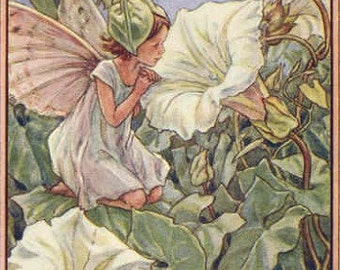 The White Bindweed Fairy - Cross stitch pattern pdf format