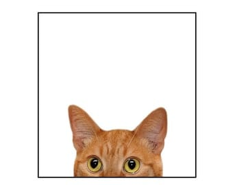 Cat, nature photography, orange cat, tabby cat, funny, silly, note cards, Blank Inside Greeting Card, SET OF 4