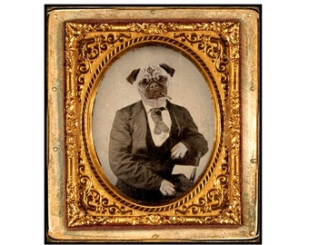 Pug, Dog, collage, mixed media, Altered Ambrotype,collage, paper collage, Sepia,Vintage, Gold, Funny, 8x10