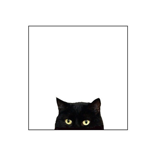 Cat, Black Cat photography,  Funny, Silly, Kids Room , Nursery Art, Fine Art Photography Print,Black, White , Gold 8x10