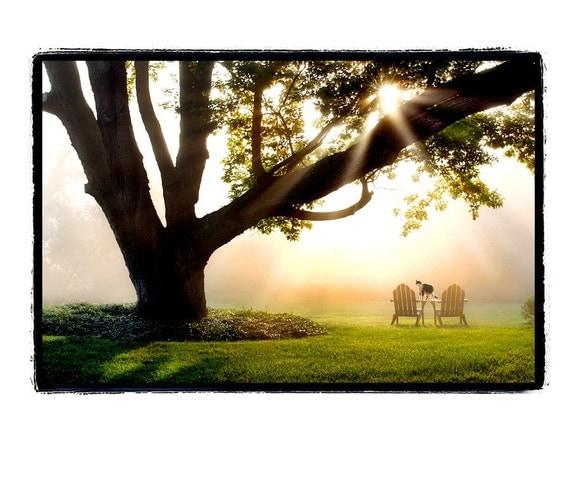nature photography, cat, cat lover, summertime, sunrise, Friend, gold, yellow, black, mist, fog, Fine Art Photography Print 8x10