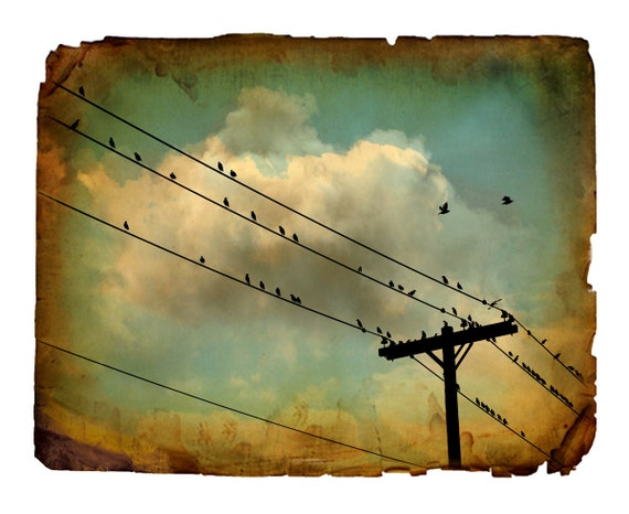 nature photography, birds, stormy, clouds, big sky, teal, sepia, cream, brown, rustic, cottage chic, surreal, 8x10 photo print