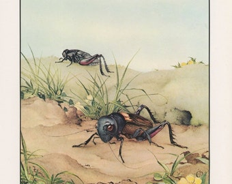 Bug Art, Insect Art, Fantastic Creatures, The Field Cricket, Edward Julius Detmold, USA, Antique Children Print