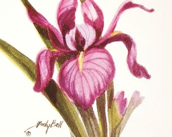 Purple Iris, Flower Print, Watercolor Art, Painting