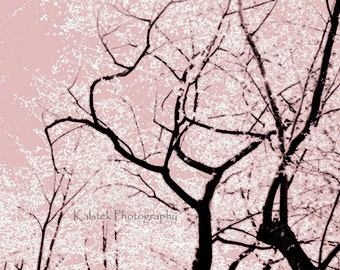 Cherry Blossom Tree Art Photograph Dreamy Pink White Black Spring Cherry Blossom Trees 8x8