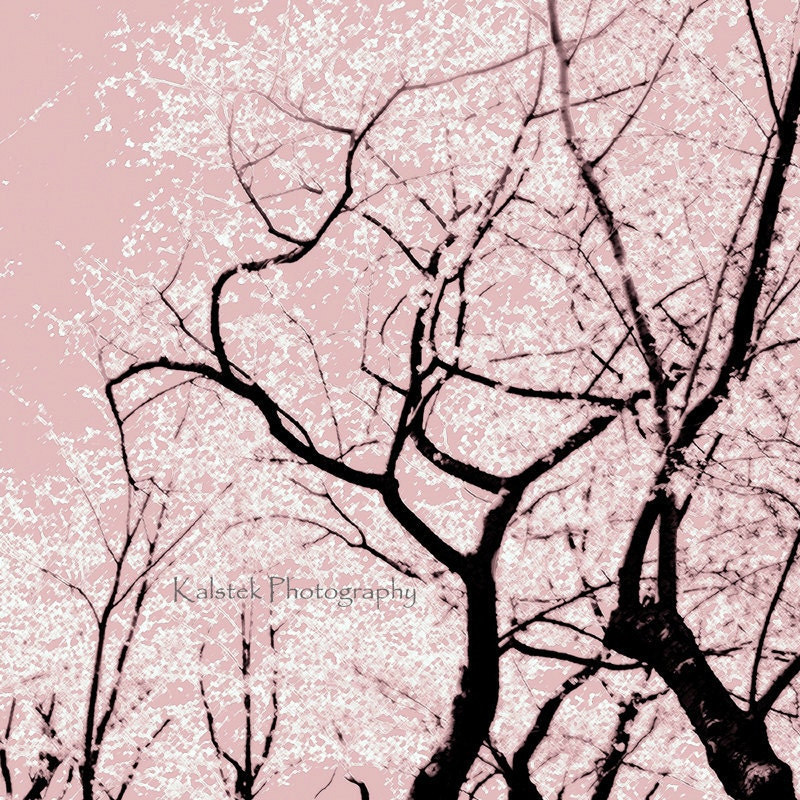 Cherry Blossom Tree Black And White: Cherry Blossom Tree Art Photograph Dreamy Pink White Black