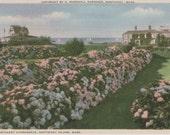 "Nantucket Hydrangeas, postcard. Gardiner ""Nantuckrome"""