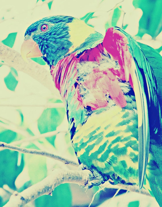Featured on NBC Animal Practice Colorful Closeup Bird Dreams Travel Photography artwork Decor Art Pastels Dreamy Parrot Bungi Like 11x14