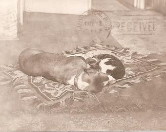 Sleeping Best Buddies Vintage Postcard 1907
