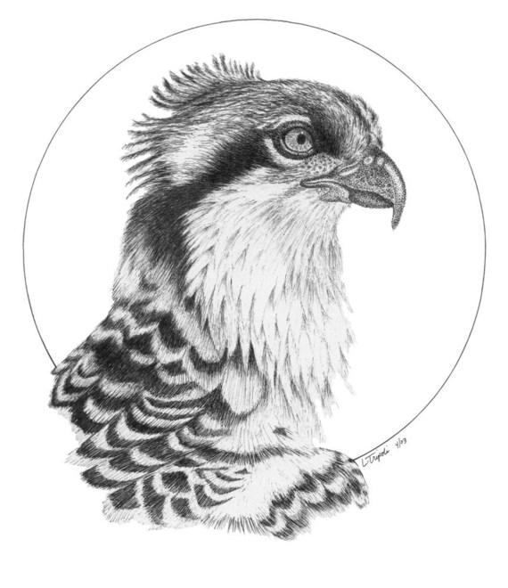 Osprey - 11 x 14 Matted Print