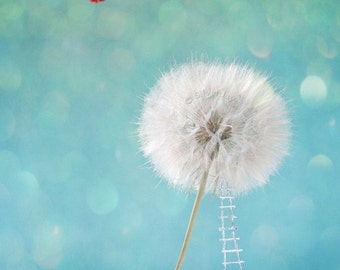Wish Dream Seeds Dandelion Red Vintage Airplane Harvest Fine Art Photograph 8x10  Fairy Tale