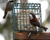 Gift Pack Bird Lovers Feed The Birds Wild Bird Food Ornithology Bird Watcher Hormone Free Healthy Birds Suet 3 Cakes Plus Feeder Cage