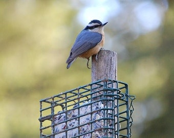 Feed The Birds SageGoods Double Seed Suet Cake Hormone Free Local Grass Fed Beef Nuts Seeds Grains Healthy Wild Bird Food