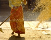 Working the Rice, Nepal, Ultrachrome K3 Archival Print