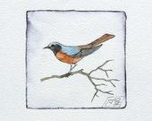 watercolor painting redstart bird original