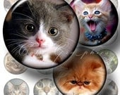 """Cool Cats - Digital Collage Sheets CG-305 - 1.5"""", 1.25"""", 30mm, 25mm, 1 inch circles - Printable Images for Pendants, Bottle Caps"""