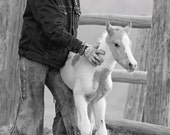 Cowboy Steadies Foal - Fine Art Horse and Cowboy Photograph - Horse - Black and White