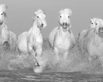 Camargue Horses Running - Fine Art Horse Photograph - Horse - Fine Art Print - Black and White