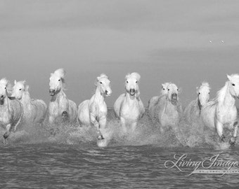 Camargue Horses Running II - Fine Art Horse Photograph - horse- black and white- Camargue