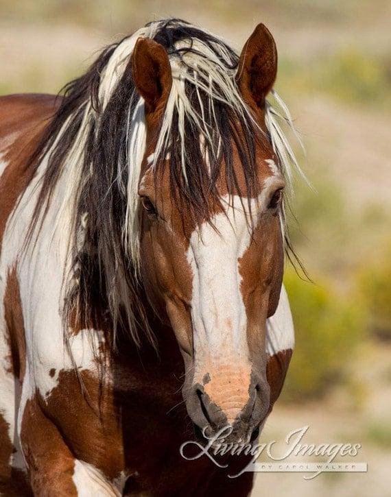 Picasso Comes Close - Fine Art Wild Horse Photograph - Wild Horse - Picasso - Sand Wash Basin -  Fine Art Print