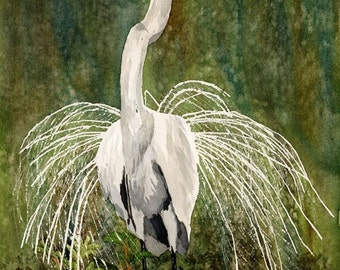 Great Egret watercolour painting