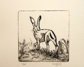 Hare Etching, Original Hare Print, Hare Picture, Animal Wall Art