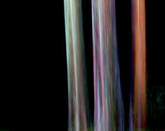 Mysterious black forest three trees rainbow eucalyptus tree fine art 12x18