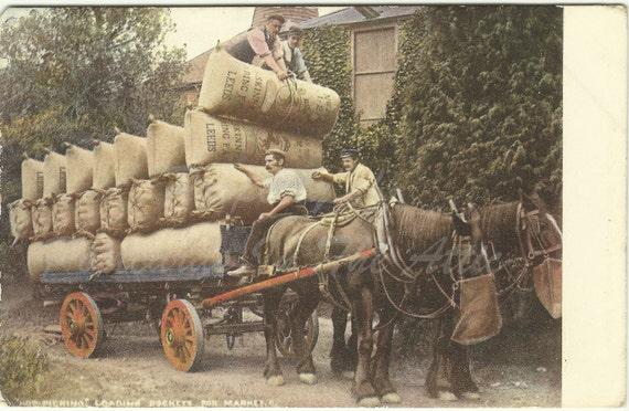 Antique Postcard - Ephemera - Loading Hops on a Horse Drawn Wagon - 1913 - Europe - Market - 99 Years Old