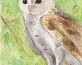 White Barn Owl bird art wildlife ACEO print art card Brandy Woods